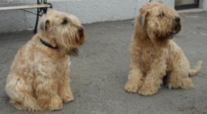 Emma og Cazo